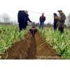 大葱培土机图片价格进口大葱培土机小型手扶开沟机开沟机报价